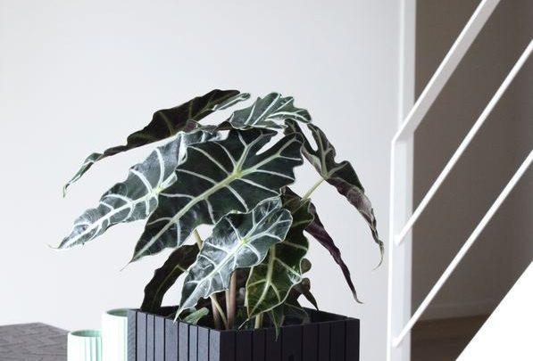 Neue Inspirationen für Pflanzenkasten